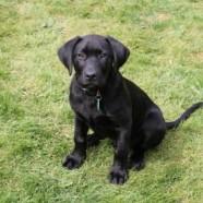 New Off-Leash Puppy Classes!