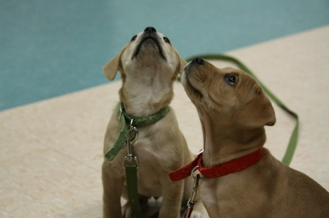 Off-Leash Puppy Socialization Classes!