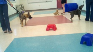 Puppy class with weird objects